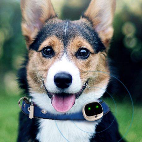 rf_v43 gps nyomkoveto naykorv kutya